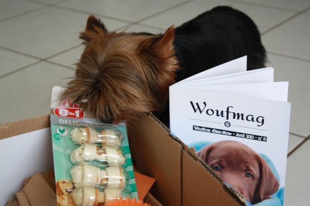 wouf box petit chien