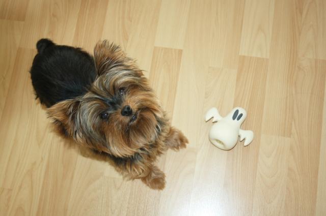 woufbox doggybox avis chien animaux box friandises blog lifestyle bretagne